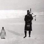 Serenading a penguin