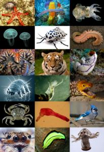 Animal_diversity